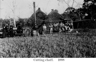 Farm Cutting chaff - Glen Innes 1888